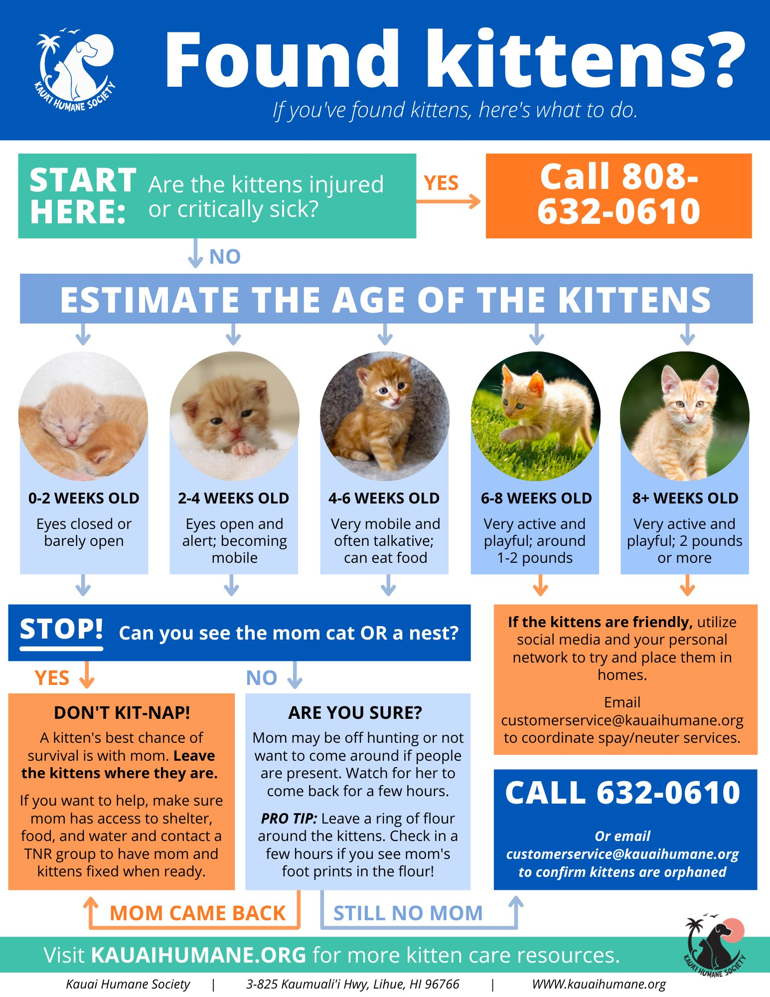 A flow chart for what to do with found kittens.