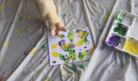 Join us on Facebook for our Kauai Humane Society cat painting parties.