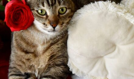 Mindy is the Kauai Humane Society's featured pet this month!