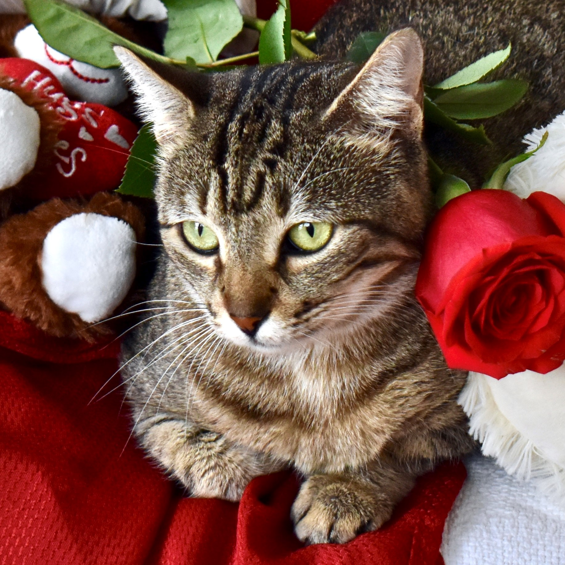 Take advantage of our February off island adoptions special.