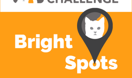 Learn more about the Million Cat Challenge blog featuring the Kauai Humane Society.