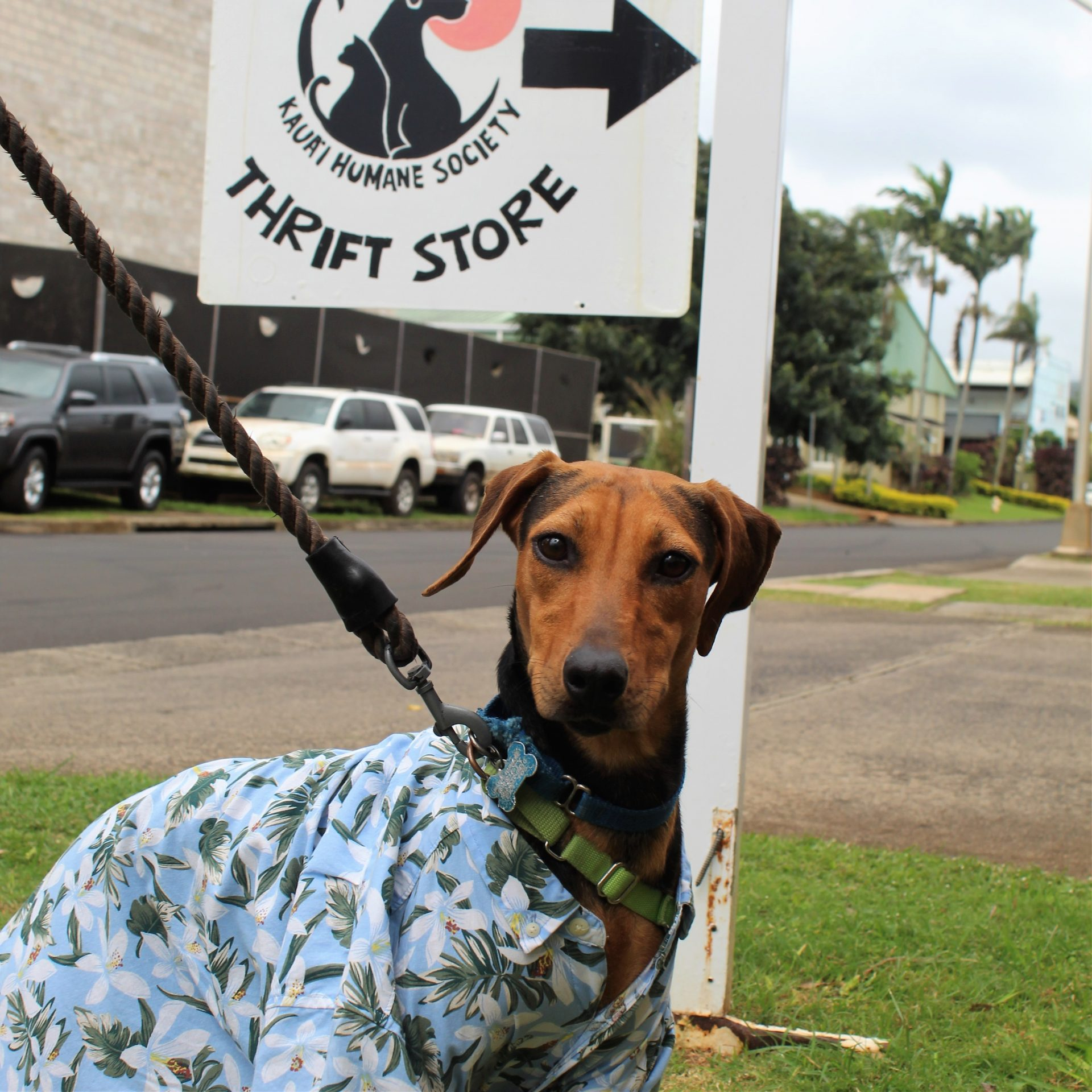 A dog at the Blooming Tails thrift shop in Kauai.