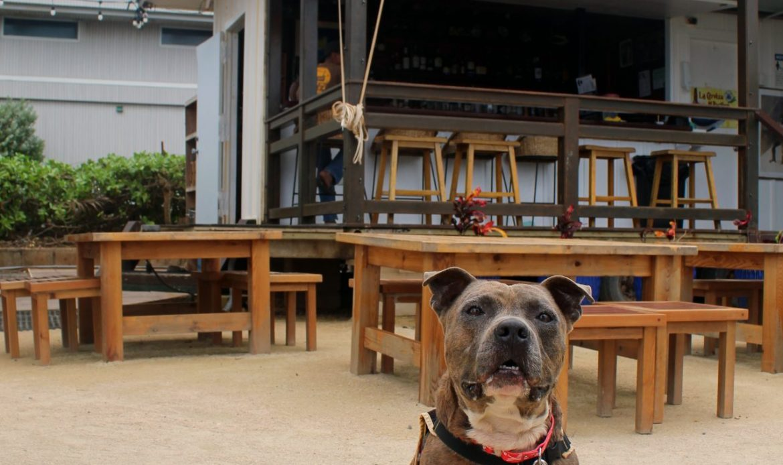 coolest dog on kauai